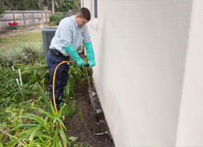 Orlando Pest Control Company What Approach Is Best For Termite Control