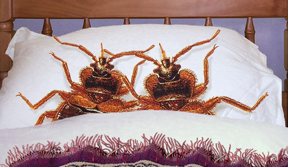 Tampa Pest Control Bedbugs Aren T Just Confined To The Bed