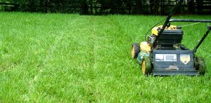 summer-lawn-care-guide-1