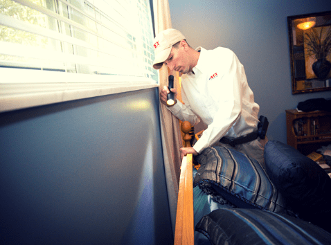 Apex Pest Control technician looking for bed bugs in a bed