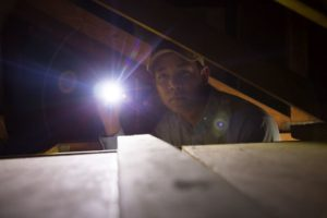 man holding flashlight while looking for pests in attic