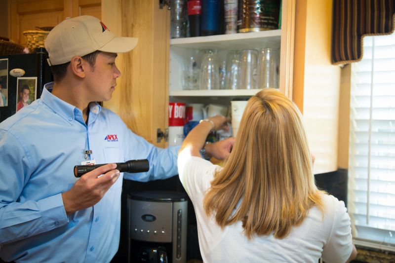 looking inside kitchen cabinet for pests