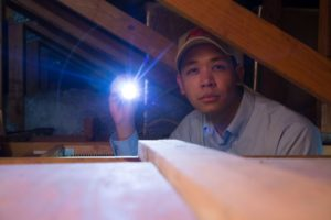 Apex Pest technician looking for termite damage in attic