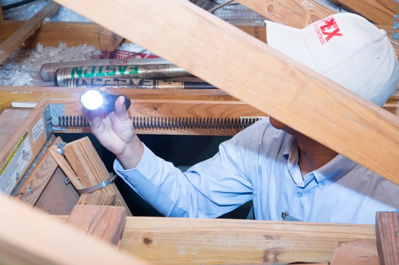Apex Pest technician using a flashlight in attic looking for termite infestation signs