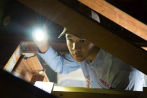 Apex Pest Control technician using flashlight inside an attic