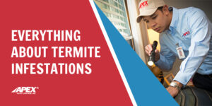 Everything about termite infestations