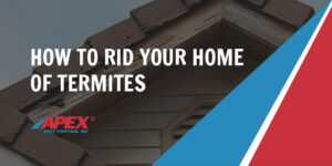how to rid your home of termites